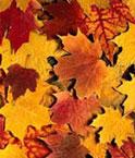 Осень нашей жизни